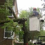 Abattage d'arbre Québec - Pro-Tec-Arbres