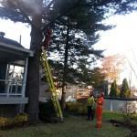 Abattage d'arbre - Pro-Tec-Arbres